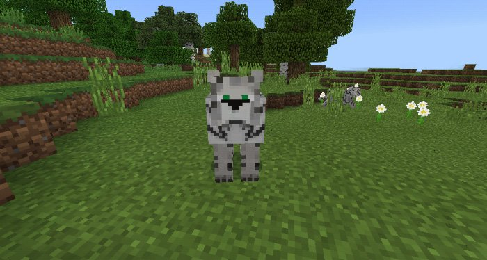 Download Tigers addon for Minecraft for Android